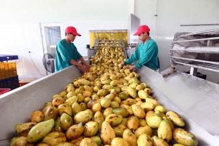 Chế biến nông sản Việt: Nỗ lực vươn tầm khu vực