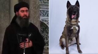 Hình chó nghiệp vụ góp công tiêu diệt thủ lĩnh IS được công bố