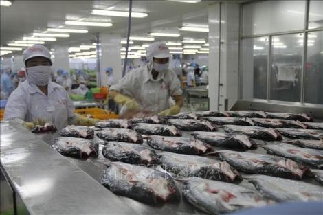 Hoa Kỳ công nhận hệ thống kiểm soát an toàn thực phẩm cá da trơn Việt Nam