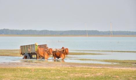 Ký ức xe bò