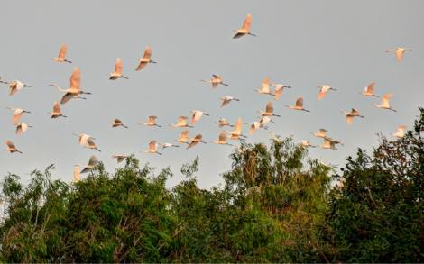 Giải pháp nào cho vườn chim Giếng Mạch?