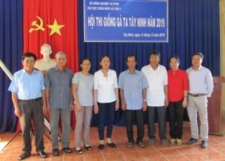 Hội thi Giống gà ta thả vườn tỉnh Tây Ninh