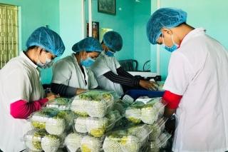 Tuần lễ quảng bá mãng cầu, nông sản thực phẩm an toàn tỉnh Tây Ninh tại TP. Hồ Chí Minh