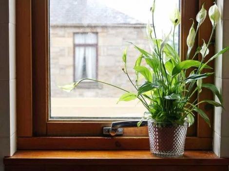 Cây trồng trong nhà ngày Tết thanh lọc không khí