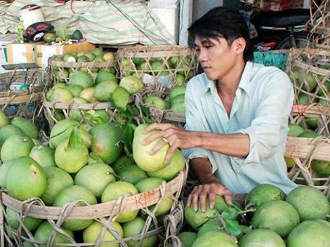 Chưa đến Tết, hàng loạt trái cây đã tăng giá mạnh