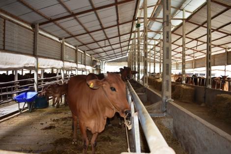 Nông nghiệp huyện Dương Minh Châu khởi sắc