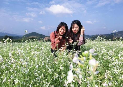Sa Pa mùa hoa cải trắng