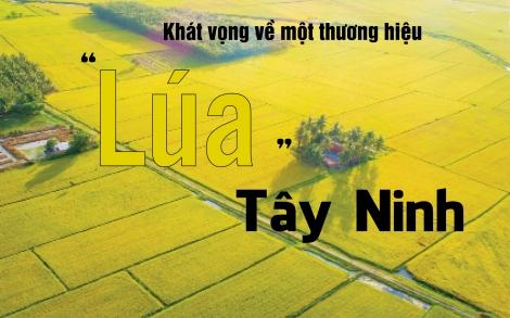 """Khát vọng về một thương hiệu """"Lúa"""" Tây Ninh"""