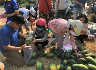 """Xã Long Thành Trung: Chung tay """"giải cứu"""" dưa hấu"""