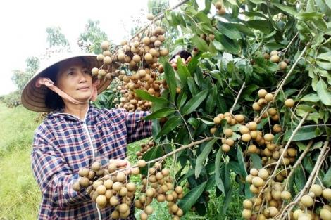 Xuất khẩu nông sản gặp khó do dịch Covid-19