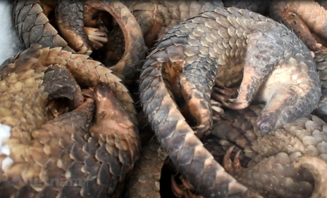 Thư ngỏ gửi Thủ tướng Chính phủ về hành động chống dịch COVID-19 của giới bảo tồn thiên nhiên