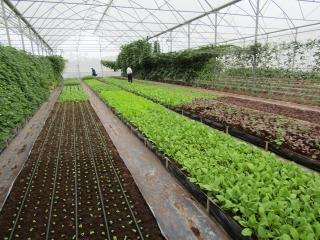 Tạo quỹ đất sạch kêu gọi đầu tư nông nghiệp sạch