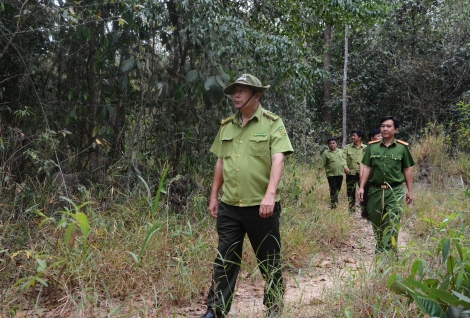 Chủ động phòng chống cháy rừng