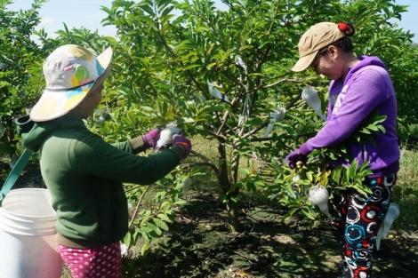 Tập trung đổi mới cơ chế, chính sách thúc đẩy phát triển sản xuất nông nghiệp