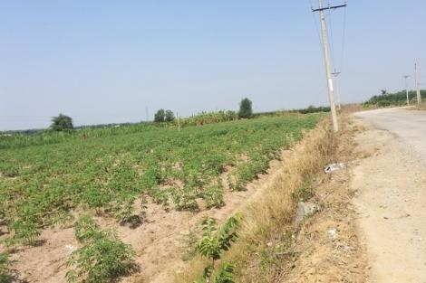 Không có chuyện cho thuê đất trồng mì đường vành đai khu du lịch núi Bà