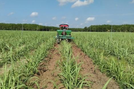 Phát triển phân bón hữu cơ, hướng đến nền nông nghiệp sạch