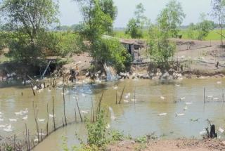 Bến Cầu: Chủ động phòng, chống dịch bệnh cho đàn gia súc, gia cầm