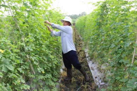 Hỗ trợ doanh nghiệp đầu tư vào các dịch vụ nông nghiệp