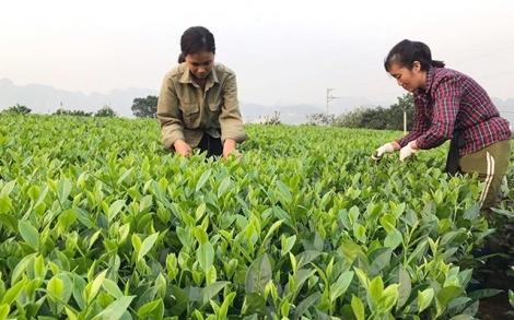 Nâng cao hiệu quả hoạt động các công ty nông, lâm nghiệp