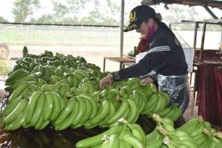 Thúc đẩy sản xuất nông nghiệp trong bối cảnh dịch bệnh Covid-19