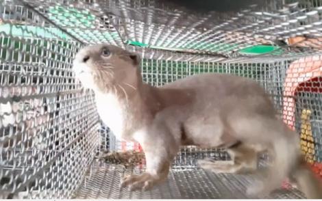 Bài 5: Nghị quyết cấm buôn bán động vật hoang dã, đừng để quá muộn