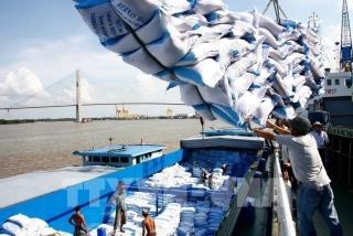 Tạm dừng ký hợp đồng xuất khẩu gạo mới