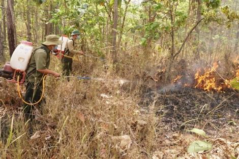 Hồi hộp phòng, chống cháy rừng