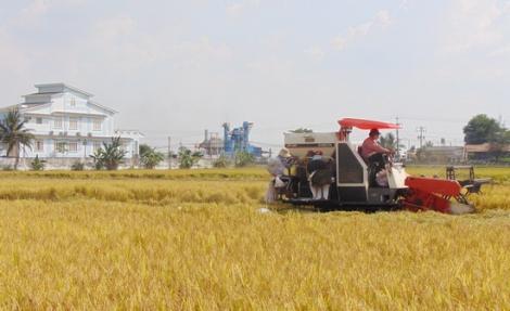 Sông Vàm mùa gặt lúa Đông Xuân