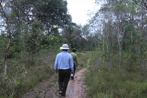 Tăng cường công tác bảo vệ rừng, quản lý lâm sản