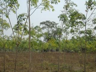Đất Ninh Điền (Tiếp theo kỳ trước)