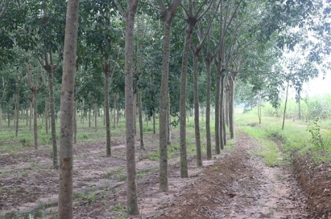 Năm 2019 độ che phủ rừng đạt 16,3%