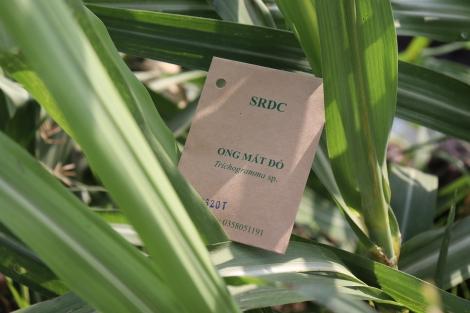 Nhiều đề tài KHCN về lĩnh vực nông nghiệp