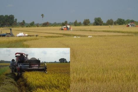 Mùa gặt ở An Bình