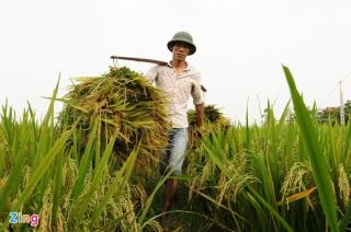 Thủ tướng yêu cầu thận trọng khi xuất khẩu gạo