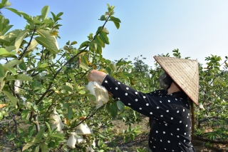 Quý I.2020 tổng diện tích gieo trồng tăng