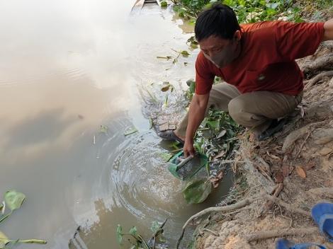 Sông Vàm Cỏ Đông tiếp tục bị ô nhiễm, bốc mùi hôi thối