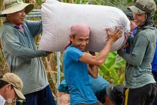 Những bất thường sau khi nối lại xuất khẩu gạo