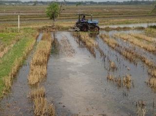 Gò Dầu: Gieo trồng vụ Hè thu năm 2020 được gần 1.500 ha
