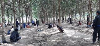 Triệt phá tụ diểm đánh bạc dưới hình thức lắc tài xỉu giữa rừng cao su