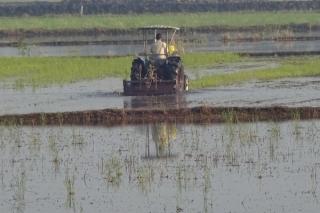 Gò Dầu: Gieo trồng vụ Hè thu đạt hơn 77% kế hoạch
