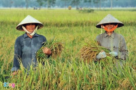 Thủ tướng đồng ý cho xuất khẩu gạo lại bình thường từ 1/5