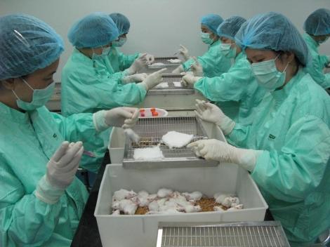 Triển vọng vaccine COVID-19 ở Việt Nam