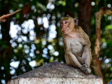 Vào rừng nuôi khỉ