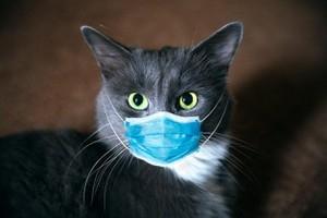 Nghiên cứu xác nhận virus corona có thể lây lan trong loài mèo