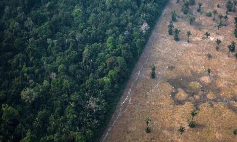 Rừng Amazon có thể là nguồn lây virus corona tiếp theo