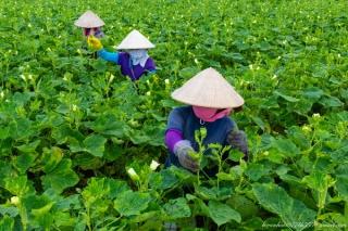 Đổi mới phương thức sản xuất nông nghiệp,thích ứng với thị trường