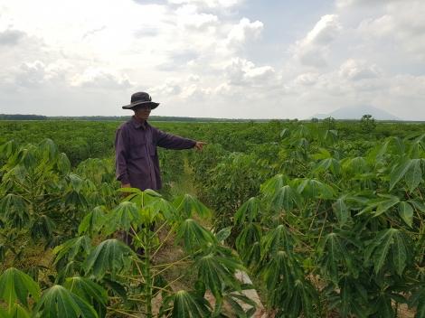 Nông dân xã Mỏ Công trông chờ nước tưới