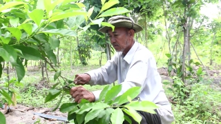 Lão nông yêu rừng