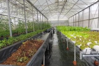 Tiếp tục tăng cường liên kết sản xuất - tiêu thụ, đẩy mạnh cơ giới hoá nông nghiệp
