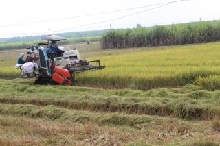 Nâng cao hiệu quả sản xuất lúa và sản xuất lúa chất lượng cao trên địa bàn tỉnh